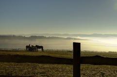 Caballos en la niebla Imagenes de archivo