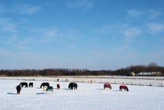 Caballos en la nieve foto de archivo