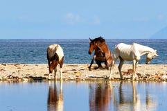 Caballos en la playa Fotografía de archivo libre de regalías
