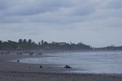 Caballos en la playa en el pueblo pesquero de Jiquilillo, Nicaragua Fotos de archivo