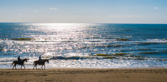 Caballos en la playa romana Fotos de archivo