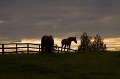 Caballos en la puesta del sol Imagenes de archivo