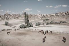 Caballos en landskape Verano en Cappadocia fotos de archivo libres de regalías