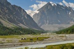 Caballos en las montañas Fotos de archivo libres de regalías