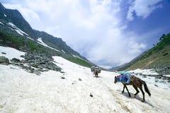 Caballos en las montañas imágenes de archivo libres de regalías