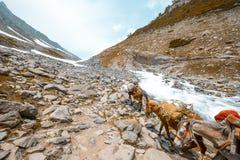Caballos en las montañas fotografía de archivo