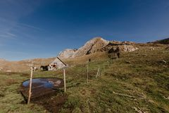 Caballos en las montañas de Montenegro foto de archivo