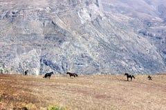 Caballos en las montañas salvajes imagen de archivo libre de regalías