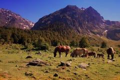 Caballos en montañas Imágenes de archivo libres de regalías