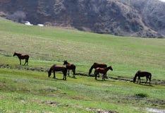 Caballos en montañas Imagen de archivo libre de regalías