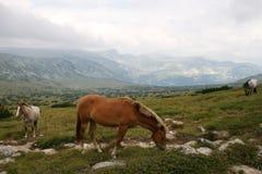 Caballos en montañas búlgaras Foto de archivo