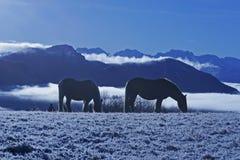 caballos en nieve Foto de archivo libre de regalías
