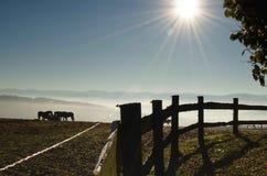 Caballos en prado con niebla Fotos de archivo