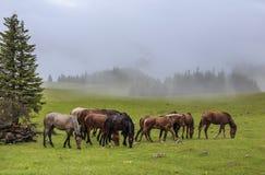Caballos en prado de la montaña imagen de archivo libre de regalías