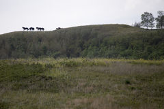 Caballos en Ridge Imagen de archivo