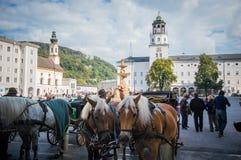 Caballos en Salzburg Fotos de archivo libres de regalías