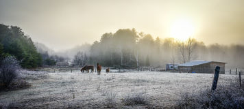 Caballos en su corral en una mañana escarchada de noviembre Fotografía de archivo