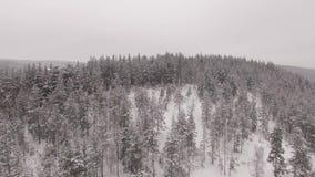 ¿Caballos en un corral en el fondo del bosque del invierno? visión aérea metrajes