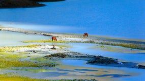 Caballos en un lugar de riego en el lago AK-Kem Fotografía de archivo