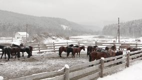 Caballos en una granja en invierno en la granja metrajes