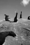 Caballos enterrados en una montaña Fotos de archivo