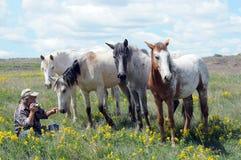 Caballos españoles del mustango con el fotógrafo Imagenes de archivo