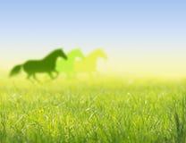 Caballos funcionados con en silueta del campo de la primavera fotografía de archivo libre de regalías