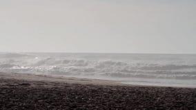 Caballos, gente y perros en la playa con las pequeñas ondas en el fondo durante salida del sol almacen de video