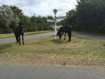3 caballos grises, marrones y negros salvajes en el nuevo bosque Imagen de archivo libre de regalías
