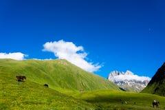 Caballos hermosos en el valle de la montaña Imagenes de archivo