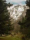 Caballos hermosos en montañas Imagenes de archivo