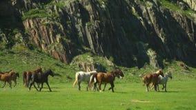 Caballos hermosos funcionados con en el valle Área de montaña almacen de metraje de vídeo