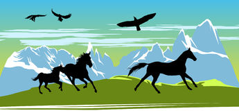 Caballos negros corrientes en las montañas Fotografía de archivo