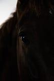Caballos negros y marrones en parada y pasto Fotografía de archivo libre de regalías