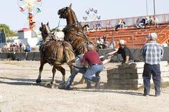 Caballos pesados en la tracción de la competición Imagen de archivo