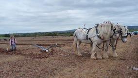 Caballos pesados en un partido de arado en Inglaterra foto de archivo