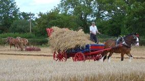 Caballos pesados en una demostración del país del día laborable en Inglaterra Imagenes de archivo