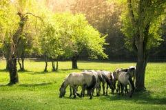Caballos en un prado Foto de archivo libre de regalías
