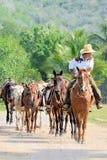 Caballos principales del vaquero mexicano para el paseo del rastro Foto de archivo libre de regalías