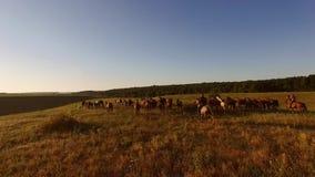Caballos que corren en un prado fotografía de archivo