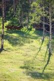 Caballos que corren a medio galope imagenes de archivo