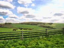 Caballos que pastan Fotografía de archivo libre de regalías