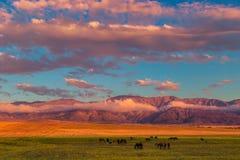Caballos que pastan en el campo en las montañas Fotografía de archivo