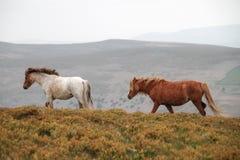 Caballos que pastan en las montañas fotos de archivo