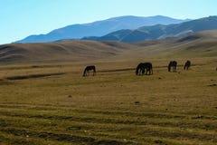 Caballos que pastan en meseta del montaje con el río en Turgen, Kazajistán Foto de archivo libre de regalías