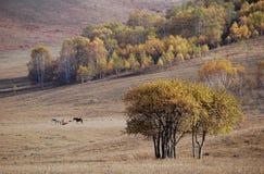 Caballos que pastan en pradera con los árboles de abedul Imagen de archivo