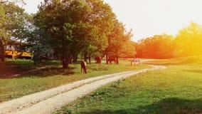 Caballos que pastan en prado verde en un día soleado Campo rural Fotografía de archivo libre de regalías