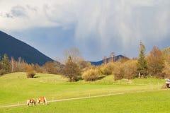 Caballos que pastan en un campo con una tormenta Fotografía de archivo