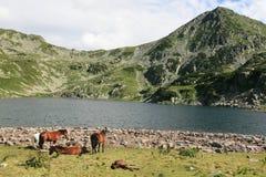Caballos que se reclinan en las montañas Imágenes de archivo libres de regalías