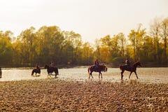 Caballos, río de Tesino Foto de archivo libre de regalías